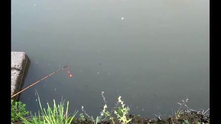 快乐钓鱼人: 水流湍急的野河, 有回流的地方, 是大鲫鱼的理想藏身地