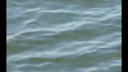 快乐钓鱼人: 有这么好的吃口, 还怕风大浪高?