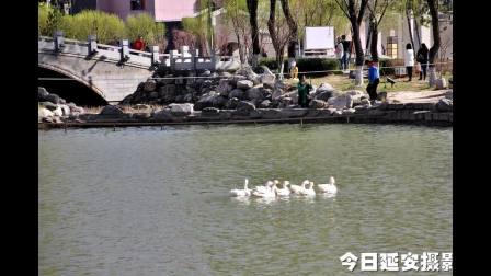西北川公园踏青赏景