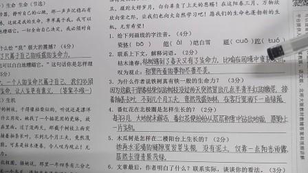 人教版语文四年级下册第五单元基础测试卷-八(二)