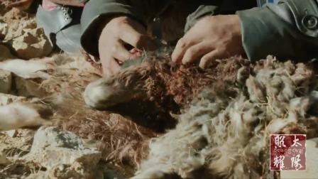 西藏微记录片《太阳照耀》 第17集: 守护羌塘