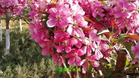 春游文化公园