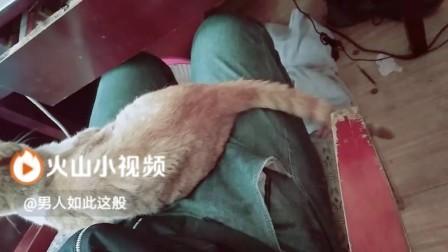 这只猫前世是90后