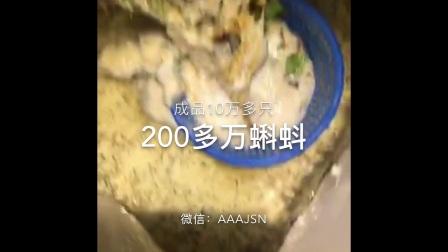 中国大泛树蛙养殖基地