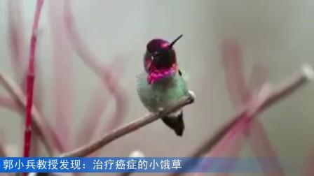 一只可爱的小鸟(药治有缘人郭小兵)