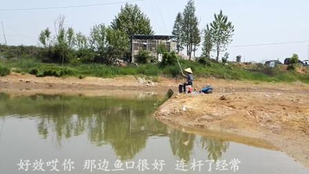 农村排水港, 天天有人来钓鱼, 像这样提竿有鱼的野钓点很少了
