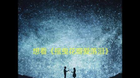 《摇曳花瓣爱落泪》小说在线全文免费阅读