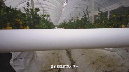杜邦™ 特卫强® 助力打造中国好柑桔