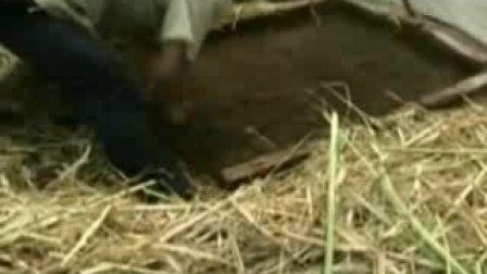 特种蝗虫养殖技术视频-在线收看
