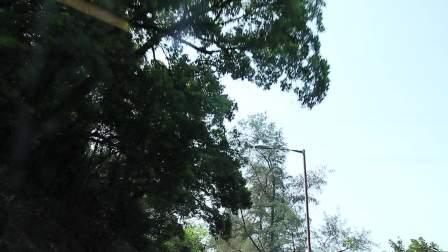 香港行视频