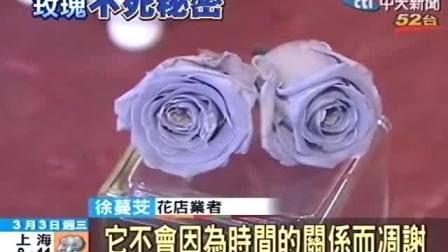 不是塑膠花 「不凋玫瑰」觸感真實 貴40倍