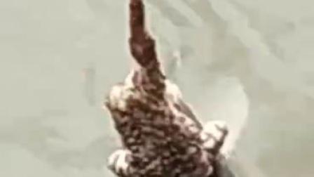 青蛙钓鱼奇闻