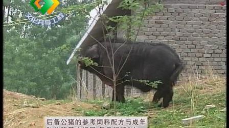南阳黑猪养殖技术(下)