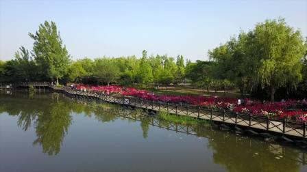 航拍:平顶山市白龟湖国家湿地公园月季花海