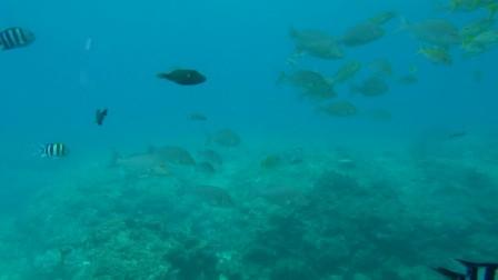 索尼4k摄像机 带你游冲绳