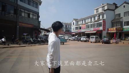 实拍云南文山三七交易中心, 各种各样的三七满目玲琅