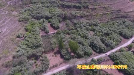 淄河村山楂花