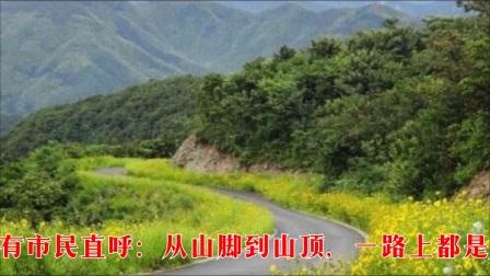 美丽的车道(宁波风车道2018.05.14)