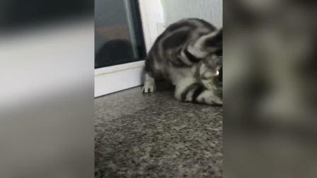 酷毙了, 我的猫, 你就是社会大哥大啊
