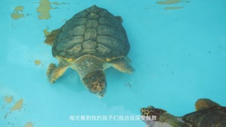 弗洛里亚诺波利斯海滩海龟保护项目