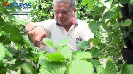 有机蔬菜-用情怀去做有机蔬菜的新农人