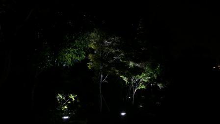 广州朗文光电 案例 杭州G20峰会运河某示范段树影灯照树视频 树影灯