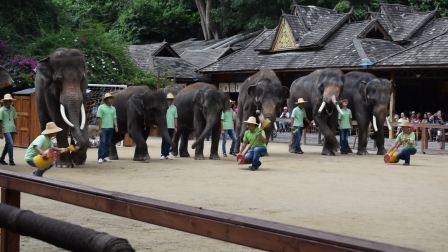 2018年5月30至6月5号,云南西双版纳野象谷大象跳舞