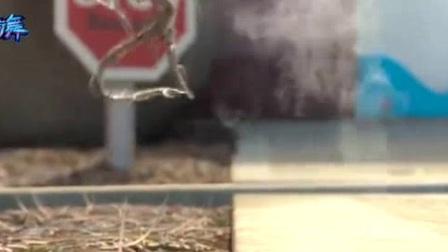 我在疯狂的蒲公英配林俊杰的这首歌做BGM, 致所有敢于追梦的人截取了一段小视频