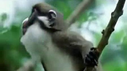 我在超级搞笑的动物配音,尼玛笑抽了。(中文