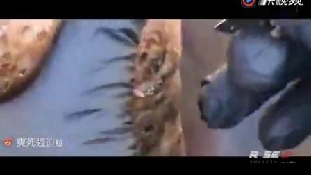 非洲沙蚤脚 part2部分