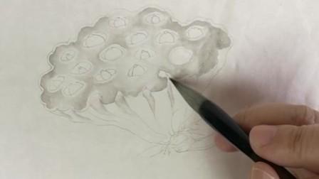 跟乐知轩主(耿老师)学工笔画——疏荷沙鸟图(1)