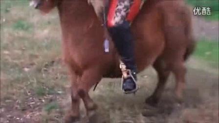 我在美女骑马截了一段小视频