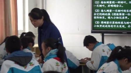 苏教版小学六年级数学上册三分数除法●树叶中的比-李老师(配视频课件教案)