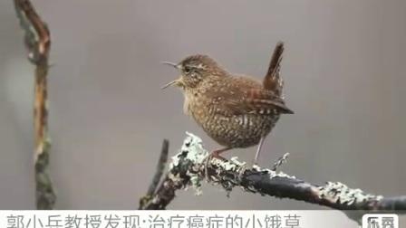 小鸟唱歌  秦兆虎弟子郭小兵