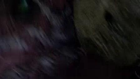 我在侏罗纪公园3截了一段小视频
