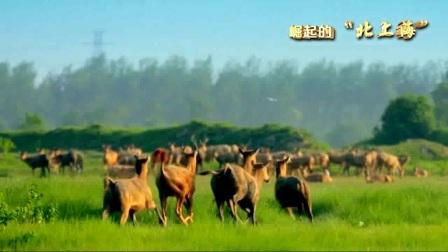 崛起的北上海0619