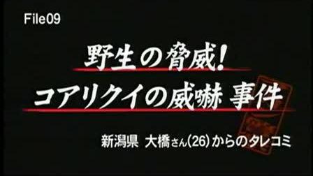 『大日本アカン警察』'09.12.28 (2-2) かまいたち コアリクイ