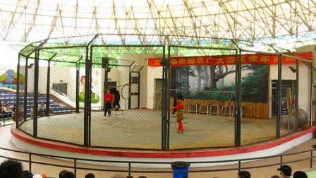 动物园里的狗熊表演