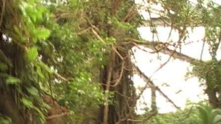 国宝金丝猴