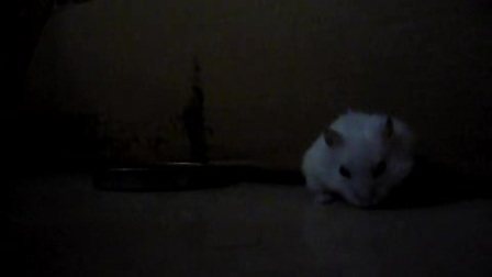 啃食中的鼠鼠