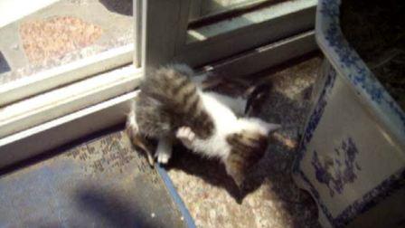 猫咪竞技要从娃娃抓起