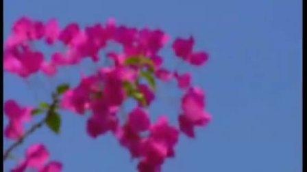 林依婷《风筝花》MV (晓峰录音工作室录制)