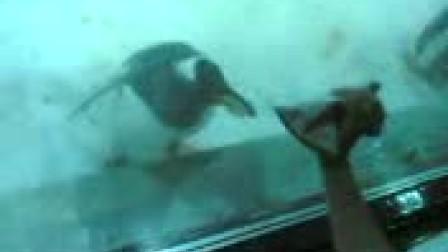 可爱的企鹅在大连