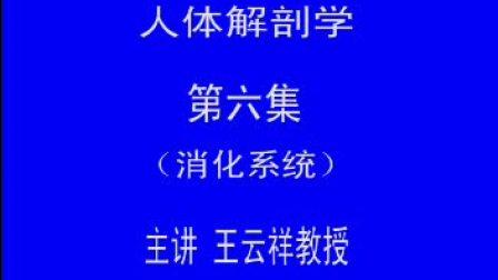 哈医大系统解剖学 6消化系统