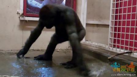 动物也疯狂-猿跳街舞-街舞视频。