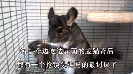 【龙猫】边吃边卖萌,抢镜头自重