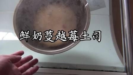 鲜奶蔓越莓土司