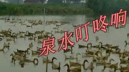 缙云惠州鸭妈妈广场舞泉水叮咚响