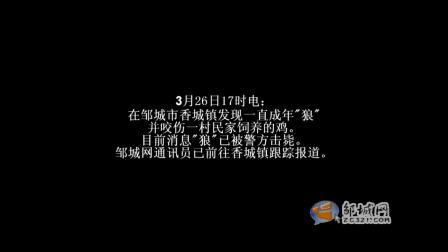 """【拍客】山东省邹城市香城镇""""狼来了!"""""""