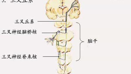 国家精品课程 视频教学 神经病学 神经内科 神经解剖12、神经系统(总论)(上)